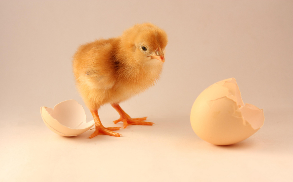 The Chicken and the Egg Dilemma