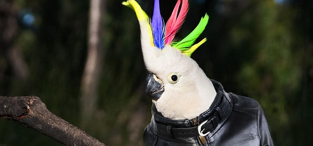 punk papagei
