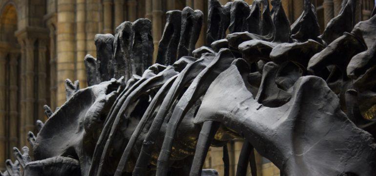 Seklett von einem Dinosaurier Seklett.
