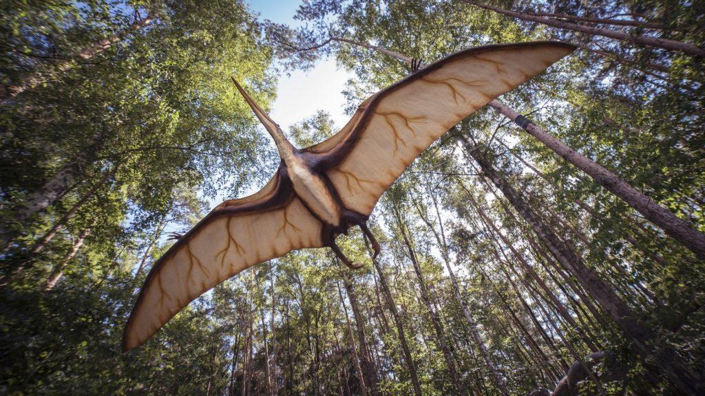 Ein Pterodactyl-Flugsaurier von unten im Flug unter Baumkronen.