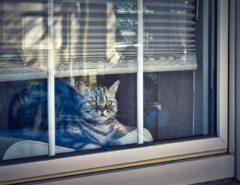 Katze im Fenster mit grünen Augen