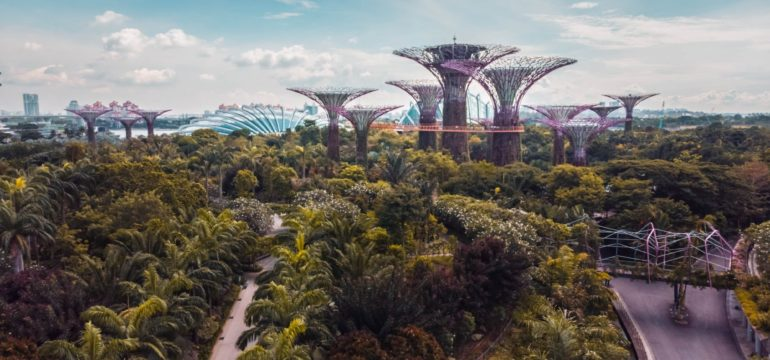 Eine weldige Landschaft voller Palmen, im Hintergrund ragen futuristisch wirkende Gebäude auf.