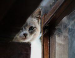 Eine Katze blickt durch an einem Fenster vorbei, in dessen Glas sie sich spiegelt.