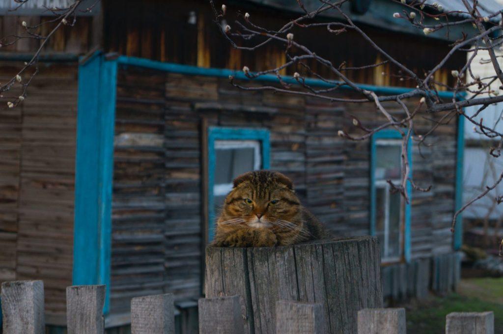Eine Katze liegt auf einem Zaunpfahl vor einem Haus und blickt genervt in die Kamera.