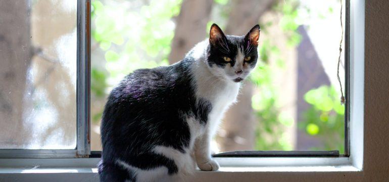 Eine schwarz-weiße Katze sitzt vor einem Fenster und blickt Richtung Kamera.