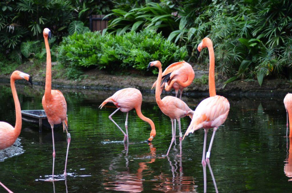 Sieben pinke Flamingos stehen in einem Gewässer.