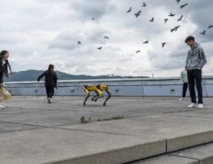 "Roboterhund ""Spot"" am Maindeck des Ars Eletronica Center in Linz"