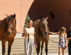 Pferde im Karl-Marx-Hof