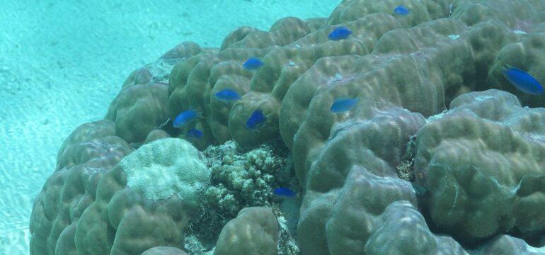 Meerseboden